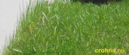 Gräset börjar växa och bli grön.
